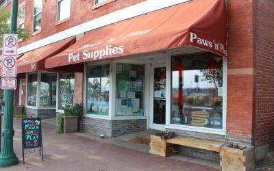 Member Spotlight: Paws 'N' Play
